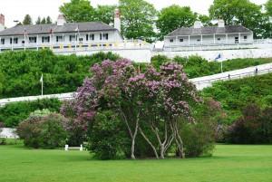 DSC 0921 Mackinac Island Lilac Festival