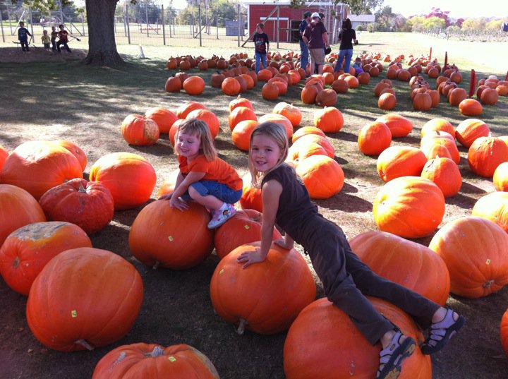 Nottawa Fruit Farm rows of pumpkins Day 96: Nottawa Fruit Farm