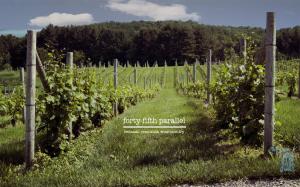 Harvest Time at Michigan Vineyards Wallpaper
