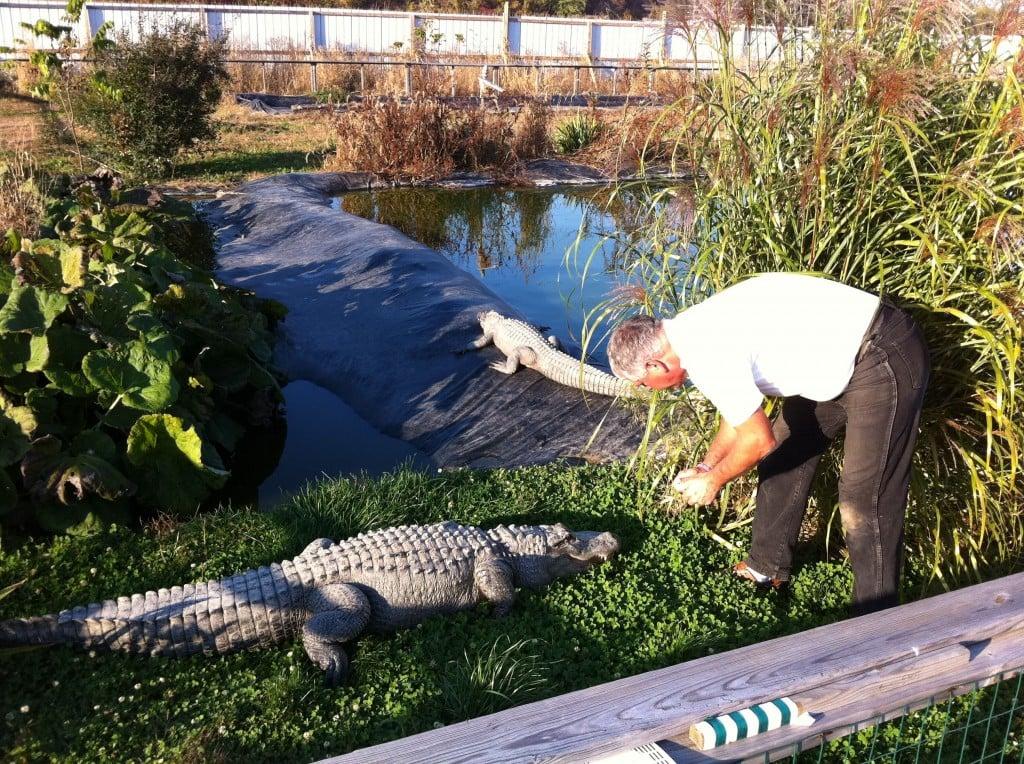 Photo courtesy of Dan Moyle Day 143: Critchlow Alligator Sanctuary