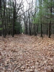 Seven Lakes Fall Day 147: Good Running Spots