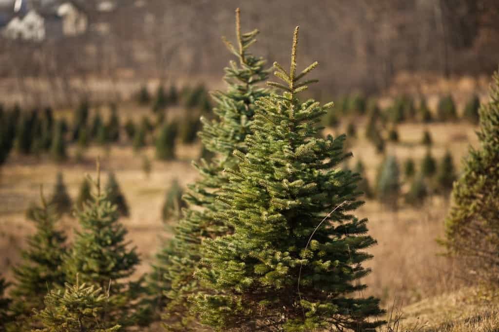 Christmas Tree Farms - The Awesome Mitten