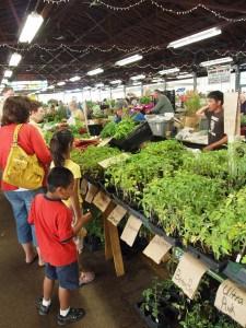 P6184768 Royal Oak Farmer's Market