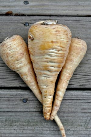 In Praise of Parsnip: A lyrical and historical meditation