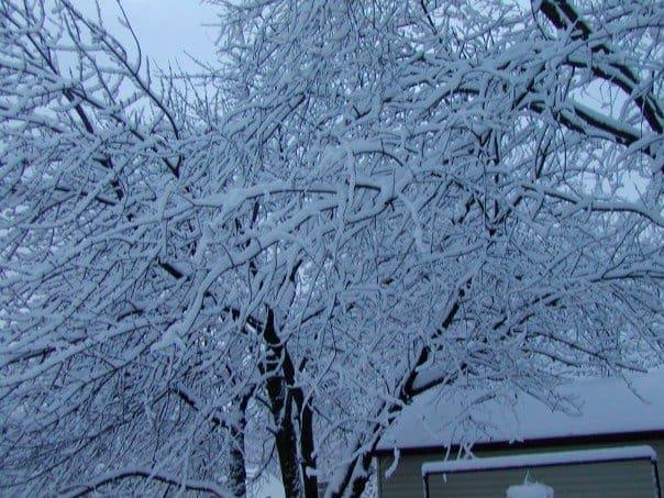Winter Backyard Surviving a Michigan Winter
