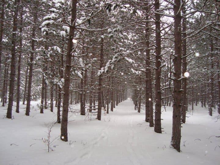 Potawatomi Trail Washtenaw County Michigan