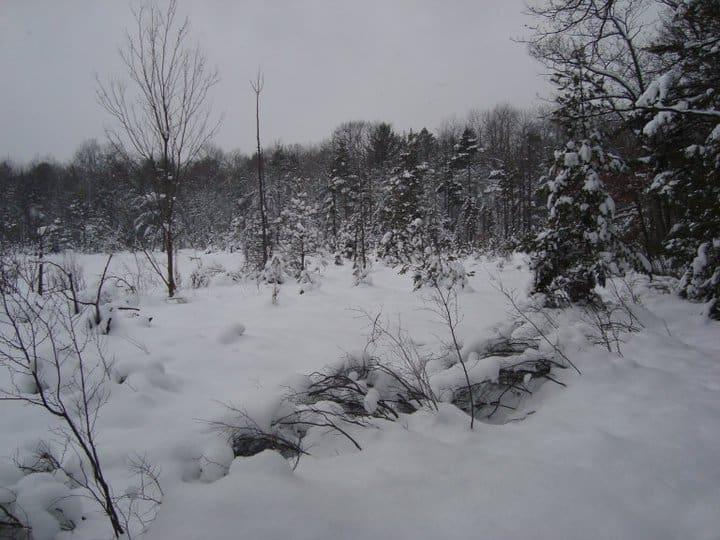 Island Lake Recreation Area Brighton Michigan