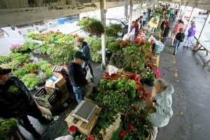 The Awesome Mitten- Farmers Markets Vs. Farms