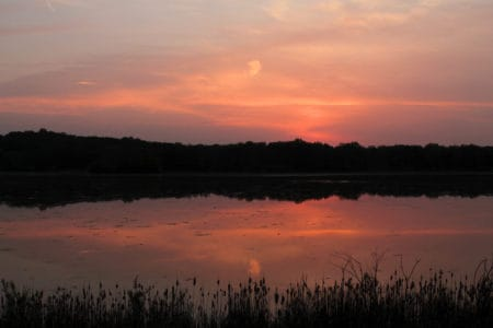 Kensington Metropark: Ospreys and Sunsets and Deer, Oh My