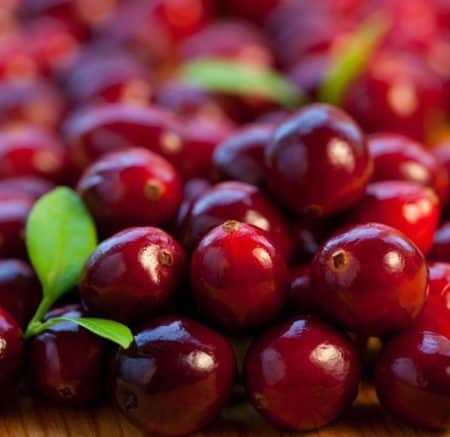 Cranberries – A Thanksgiving Favorite Grown in Good 'Ol Michigan