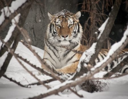 Wild Winter Weekends at the Detroit Zoo for Kids and Adults
