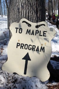 The Awesome Mitten-[Maple's Sweet Story: Maple Syrup Production in Michigan's Metroparks]