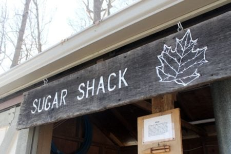 Maple's Sweet Story: Maple Syrup Production in Michigan's Metroparks