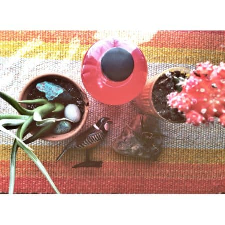 Emily Helmus: Bloom Ferments