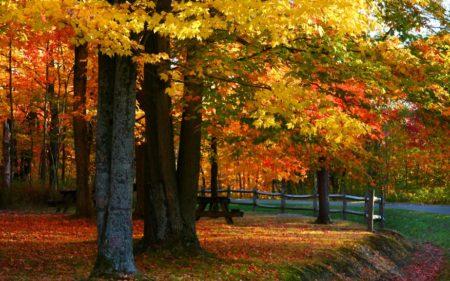 10 Ways to Make the Most of Autumn Around Detroit