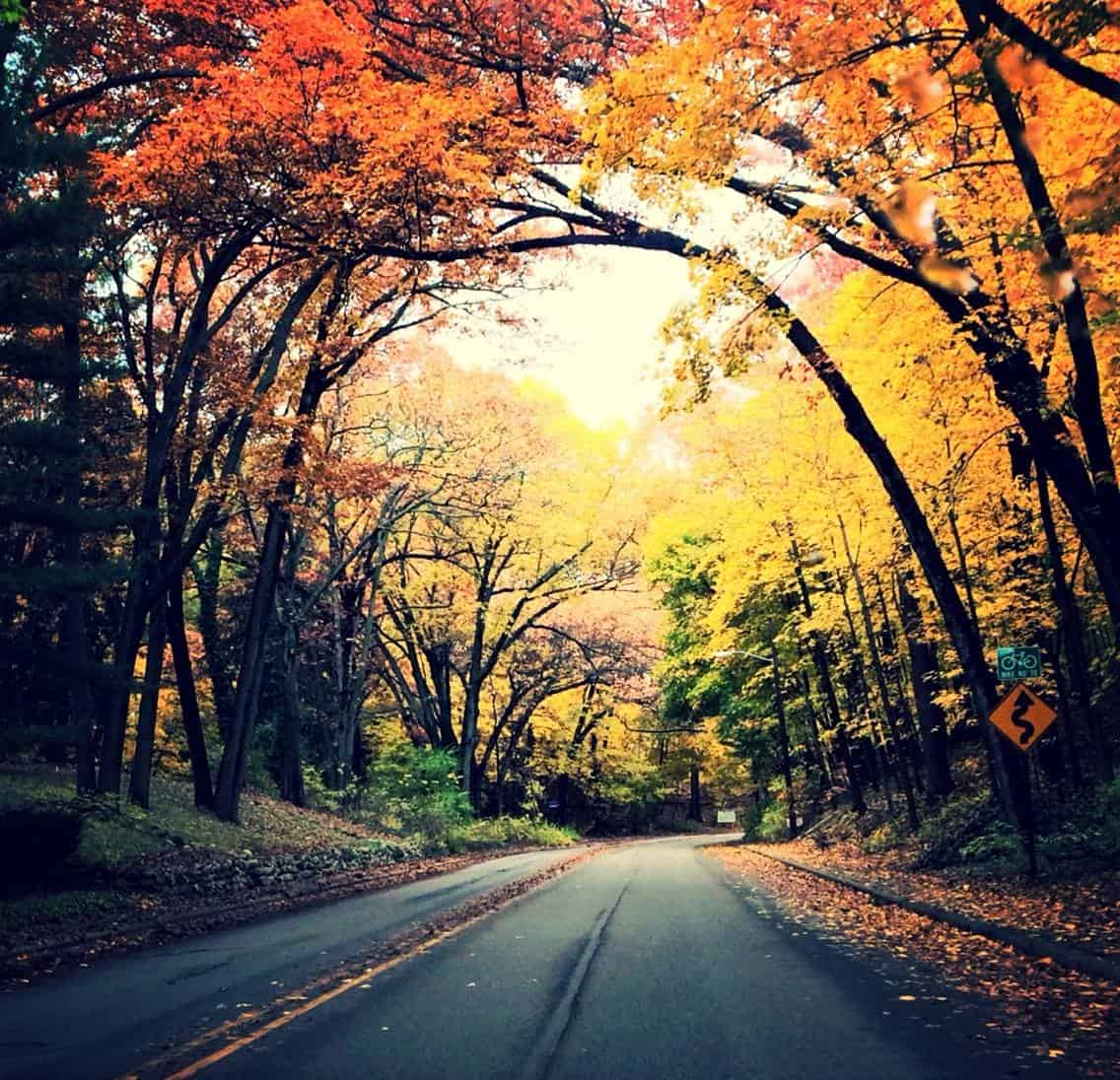Image result for fall road