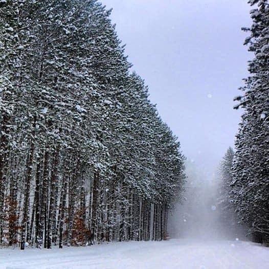 10305952 417893568376668 7652635166156819667 n Michigan Bucket List: 5 Ideas for a Winter Date Night in Mid-Michigan