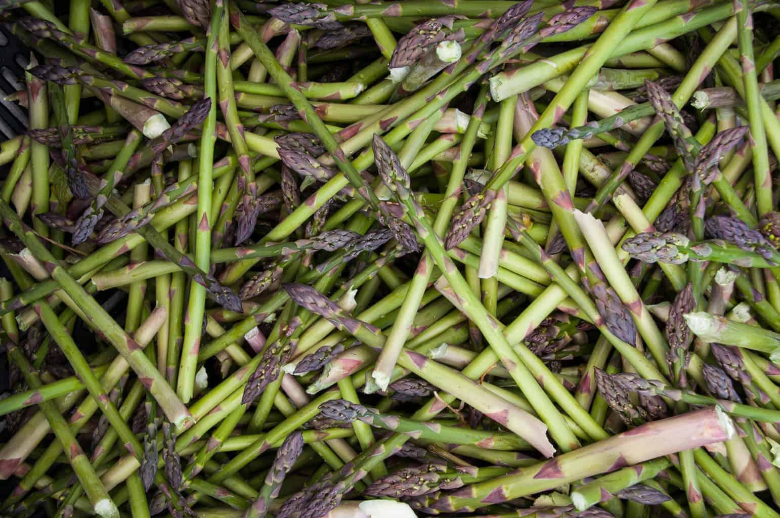 spring.asparagus.norconk.cmc 1 scaled Michigan Asparagus Recipes