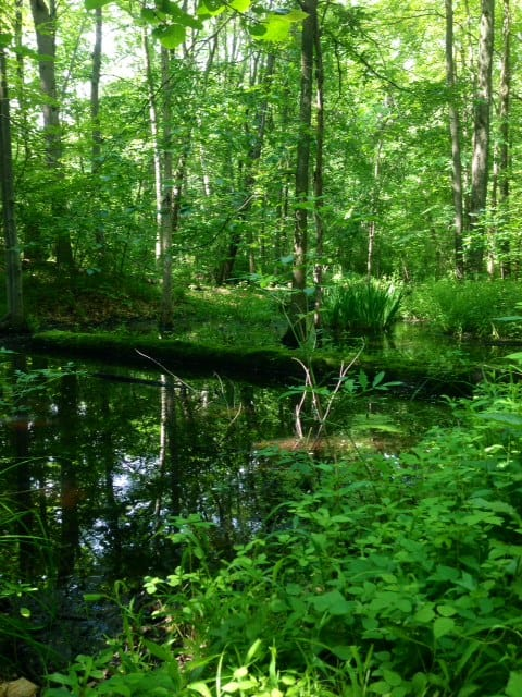 The Awesome Mitten - Bald Mountain State Recreation Area