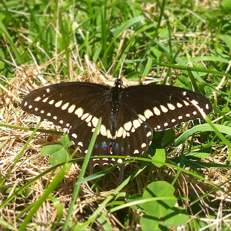 The Awesome Mitten - Butterflies in the Mitten