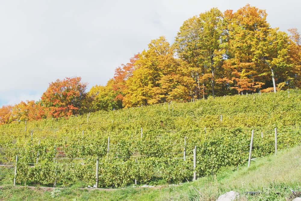 Make a Stop at Pond Hill Farm During a Tunnel of Trees Tour - Awesome Mitten