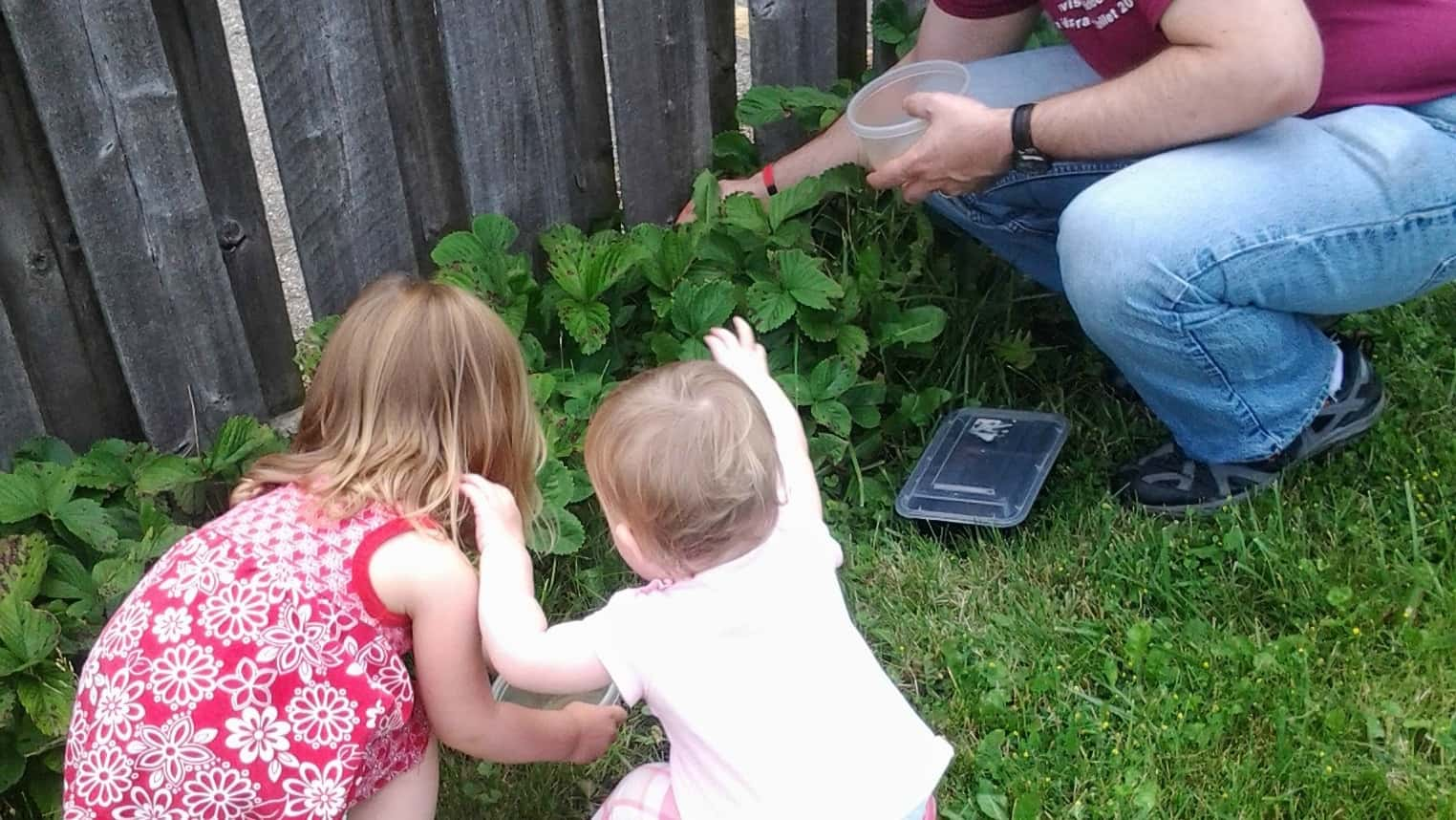 Children can help pick vegetables during nutrition month