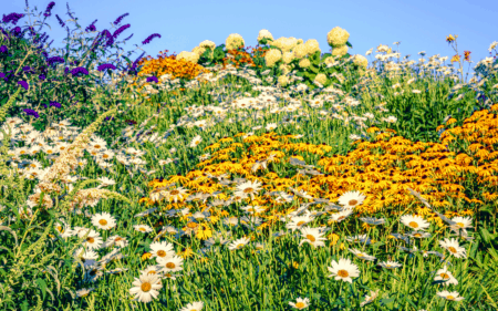 7 Michigan Wildflowers to Find & Enjoy this Year