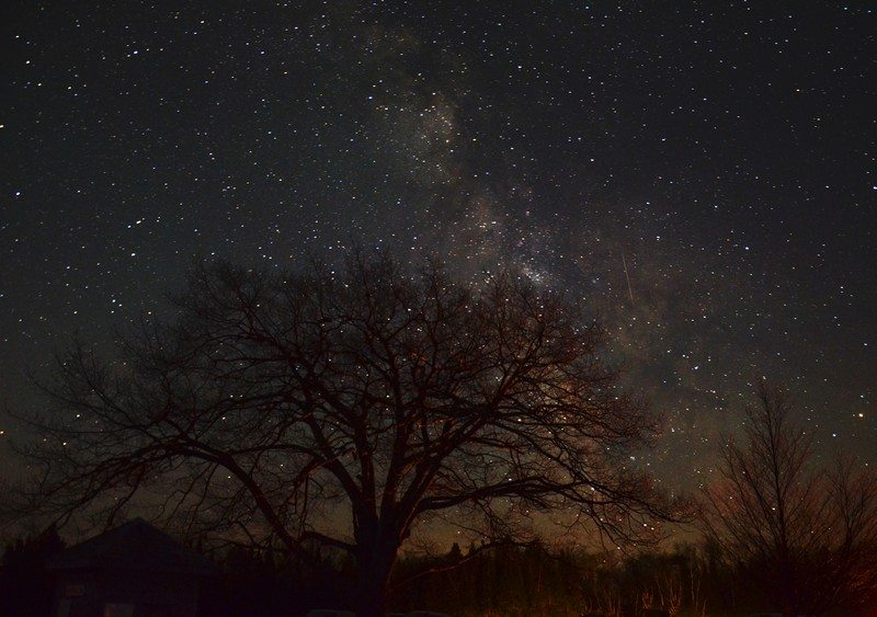 Tree Milkyway See the Stars at Headlands International Dark Sky Park | Mackinaw City, MI