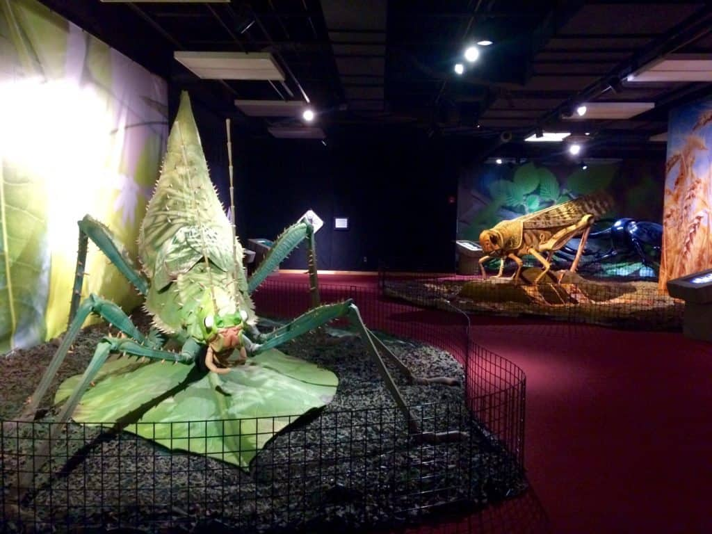 """""""A Bug's Life"""" at Sloan Museum. Photo courtesy of Joanna Dueweke."""