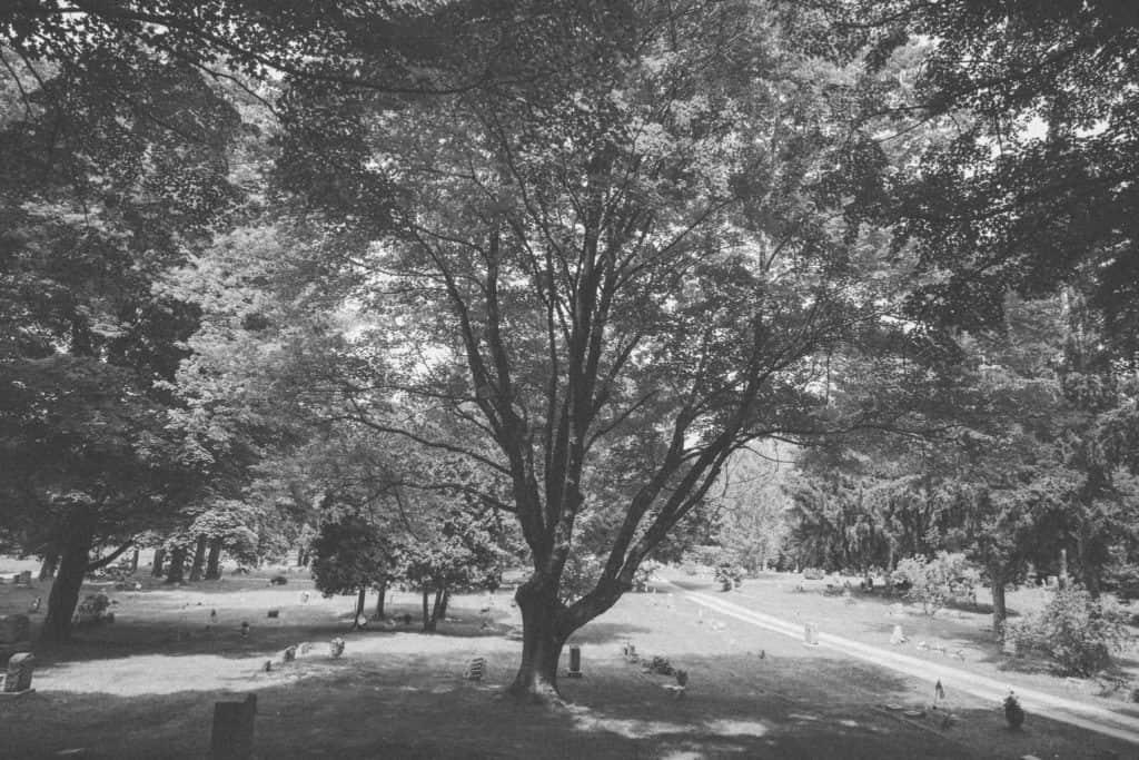 Nunica Oak   Photo by Gideon Hunter
