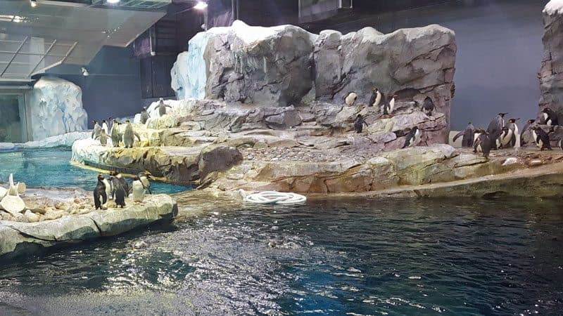 Why the Detroit Zoo Over All Others - The Awesome Mitten