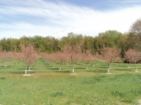 10 Little Known Facts About Michigan Agriculture
