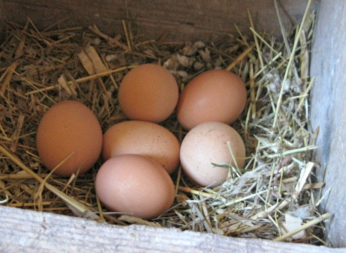 Michigan eggs laid by some eggcellent cage-free chickens. Photo Courtesy of Margaret Clegg - The Awesome Mitten