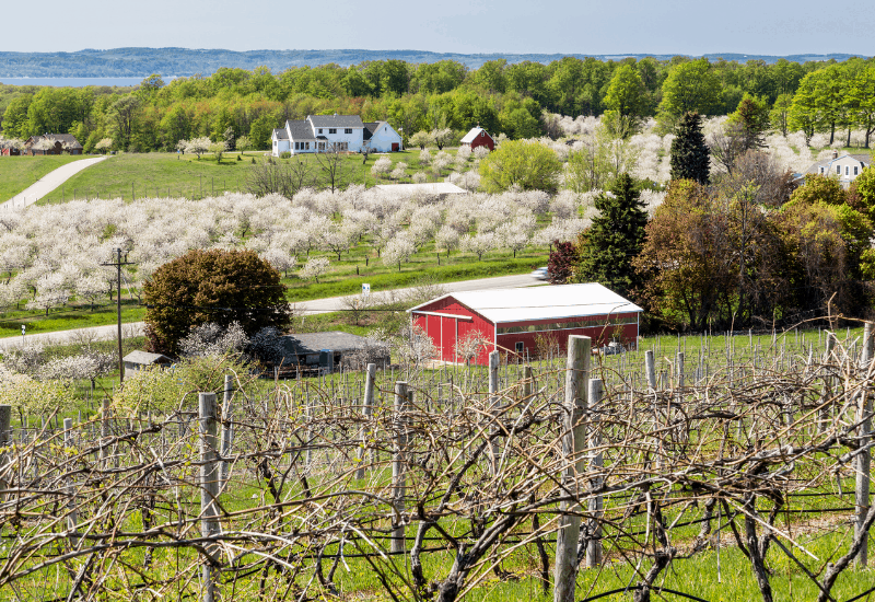Vineyards & Cherry Blossoms Traverse City