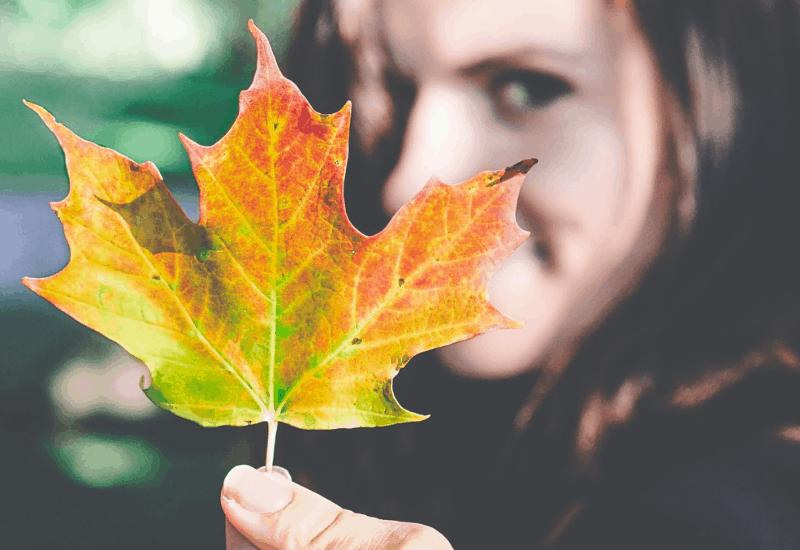 Fall Color in Michigan