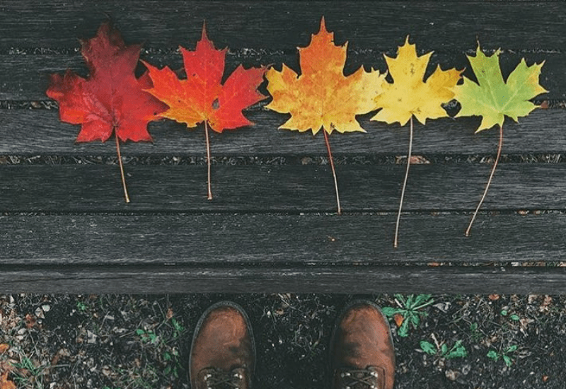 Fall Colors - Michigan