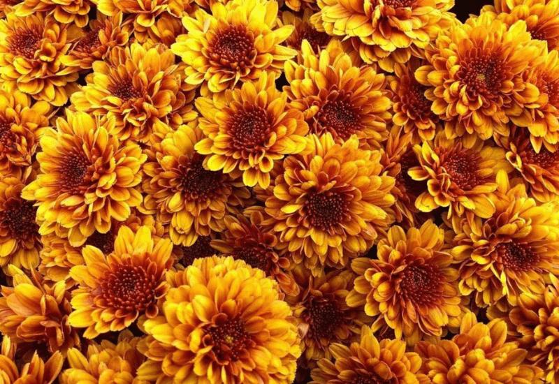 fall in Michigan - flowers