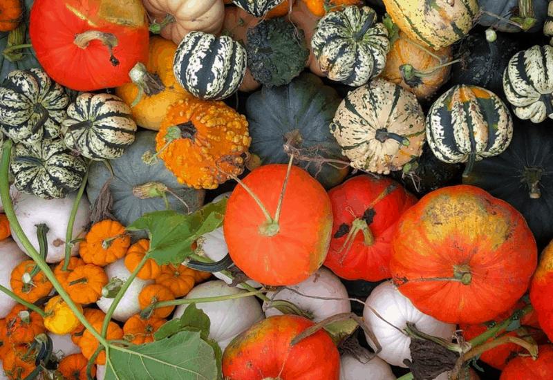 fall in michigan - pumpkins