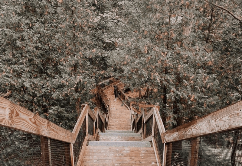 views of fall in michigan