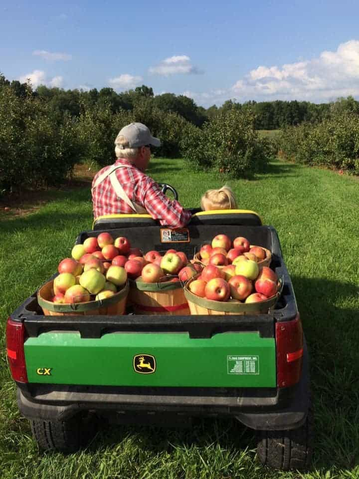 let's go to the apple orchard in michigan