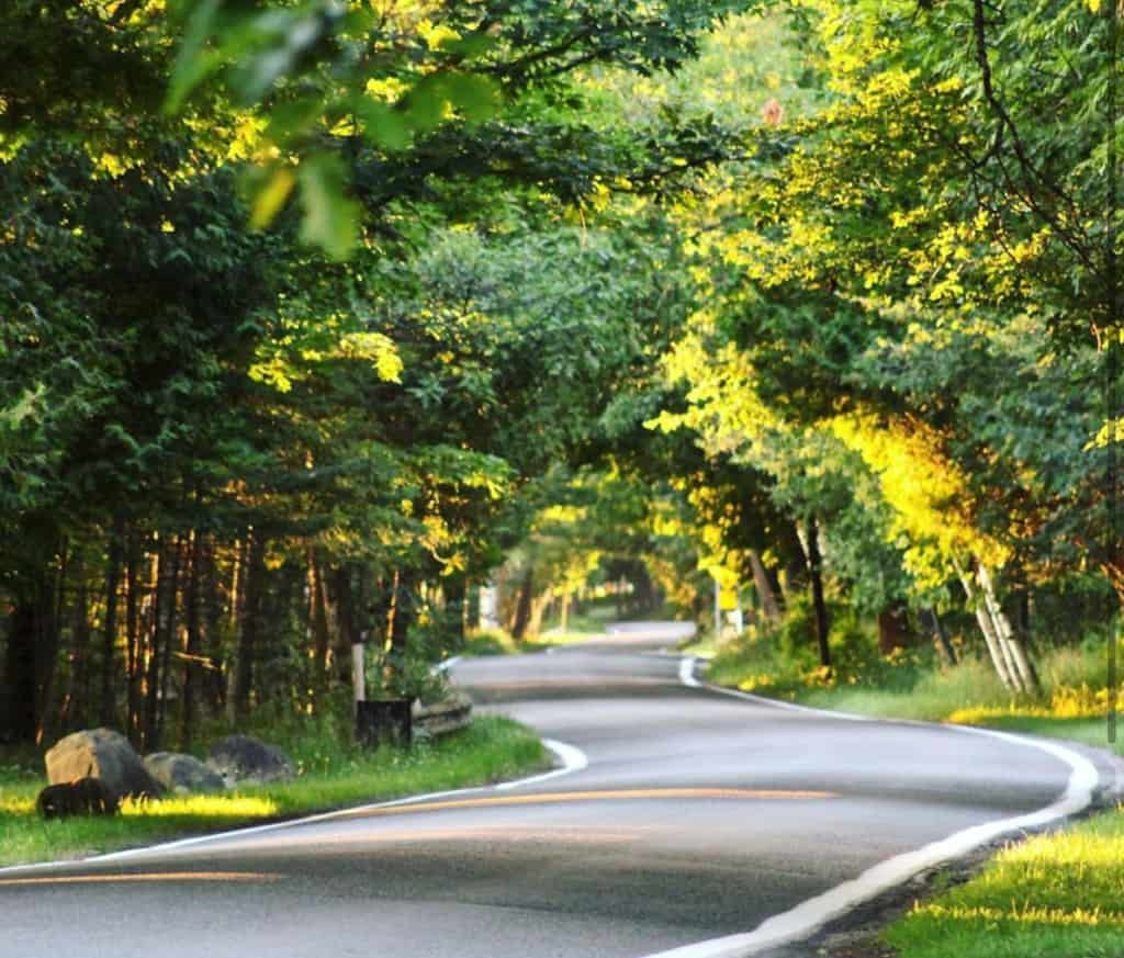 Michigan Tunnel of Trees on M-119 in Summer