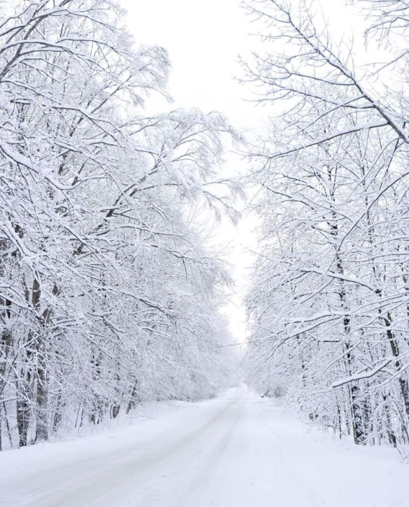 Tunnel of Trees in Winter | M-119