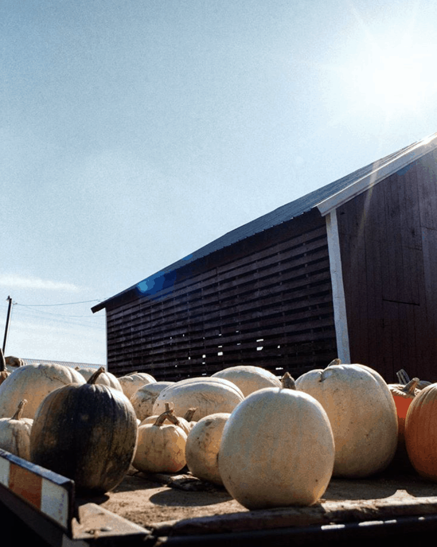 best places to pick pumpkins in Michigan