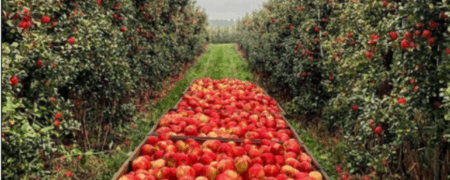 best michigan apple orchards cider mills