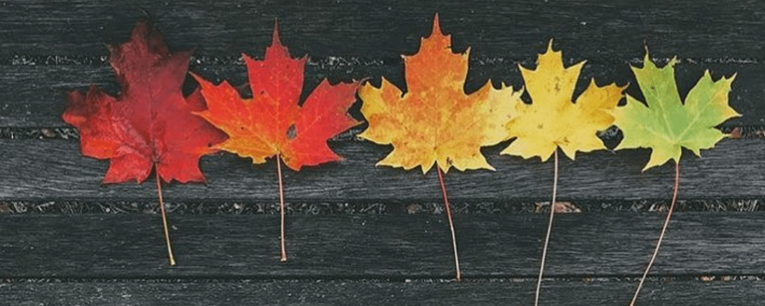 best fall things to do Michigan