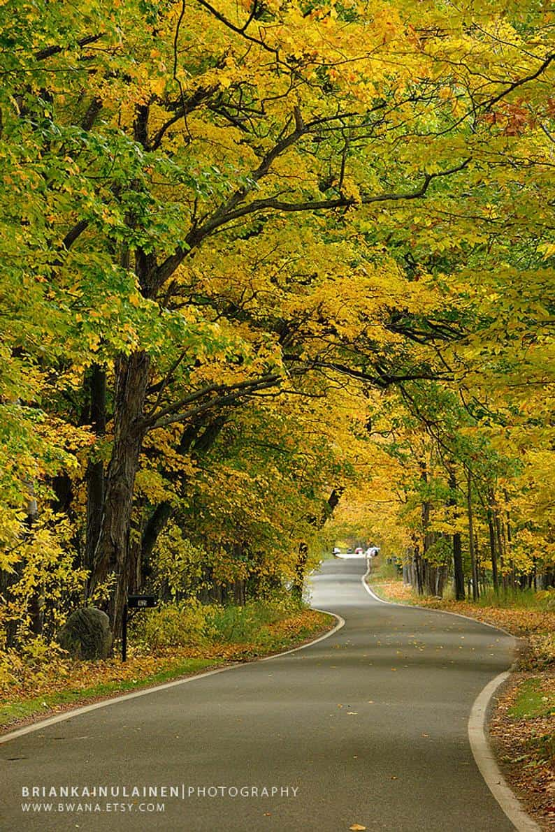 Tunnel of Trees in Good Hart, Michigan