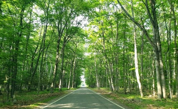 leequarrier ig 1 20 Stops to Include on Your Next M-119 Tunnel of Trees Michigan Drive