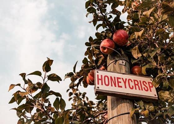 best apple orchards & cider mills in Michigan