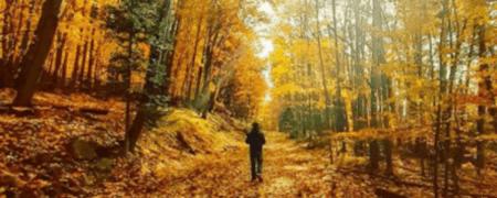 11 11 20 iron mountain November 2020 #MittenTrip Ideas