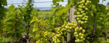 15+ Best & Unique Traverse City Wineries & Vineyards